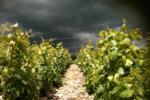 Bourgogne Rouge - Photo n°3