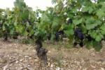 Bourgogne Rouge - Photo n°4