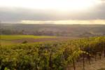 Bourgogne Rouge - Photo n°5